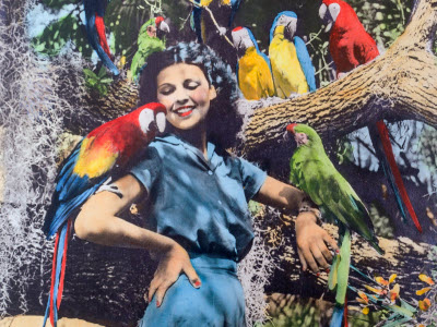 Artists Who Brought Florida to Life
